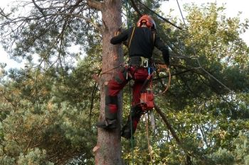 Tree Prunning and Trimming